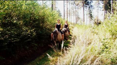 Majówka joga i konie w Nowinie